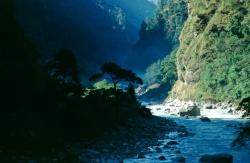 AW003 - Tree in mist, Kaligandaki river valley, Nepal