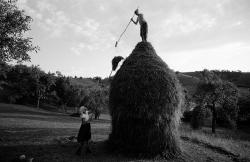 DE014 - Stacking hay, Valeni, Maramures, Romania