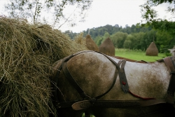 DE018 - Horse and hay cart, Sarbi, Maramures, Romania