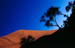 AW006 - Ayers Rock and Eucalyptus Bushes