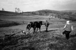 DE013 - Plowing a field above Valeni, Maramures, Romania